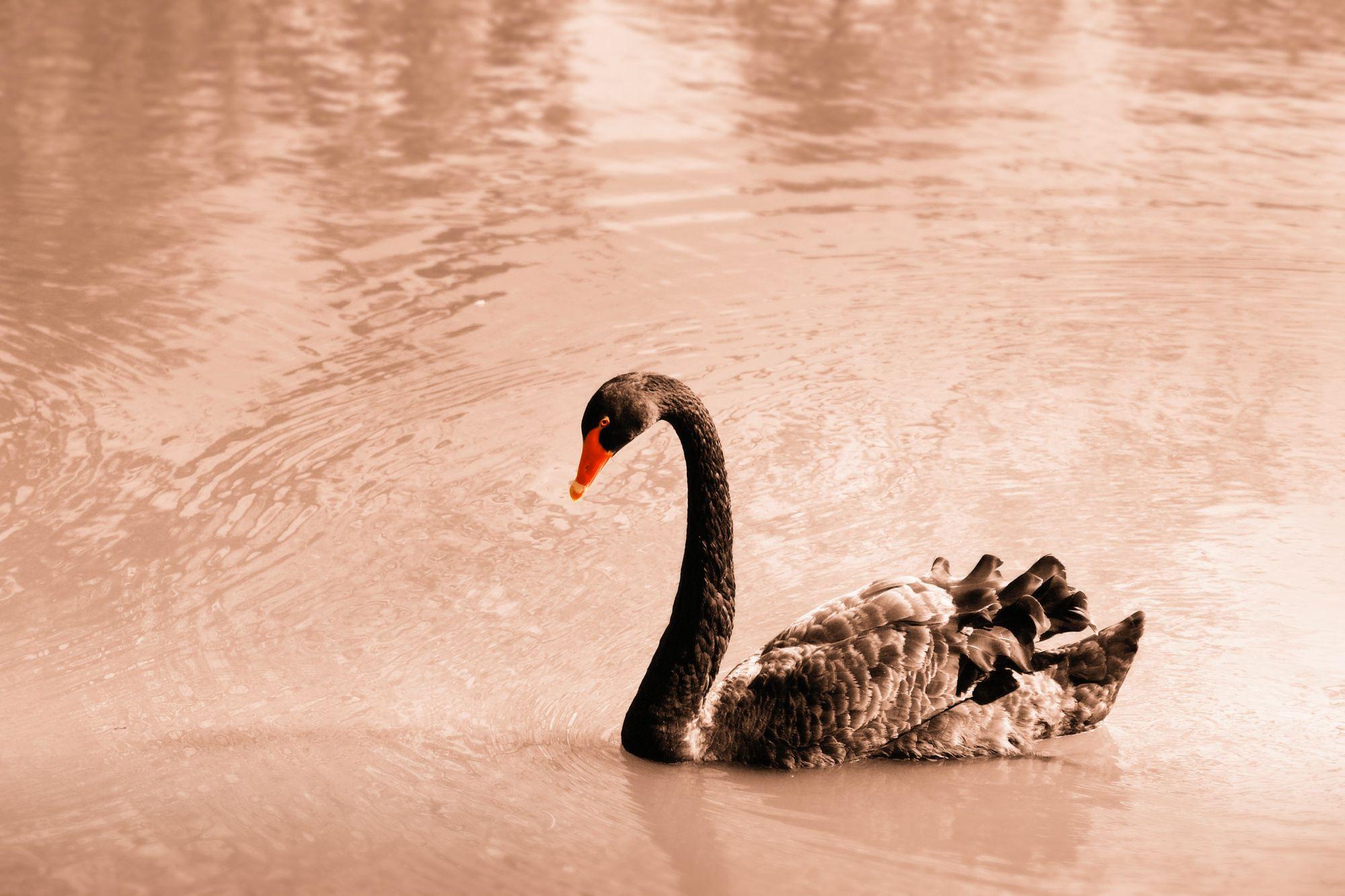 COVID-19 Black Swan Event