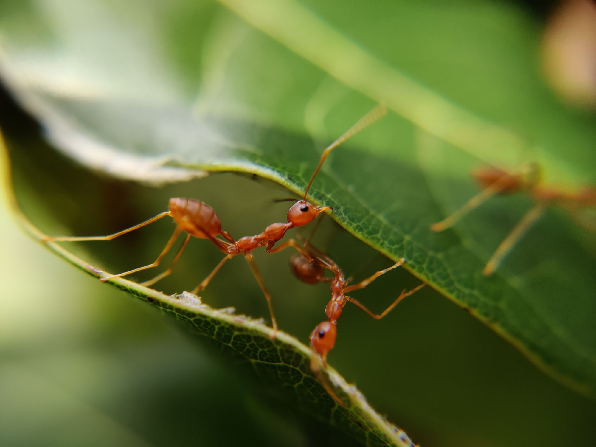 Ants fighting for survival
